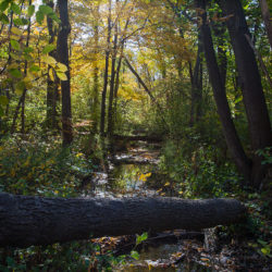 a woodland creek in autumn