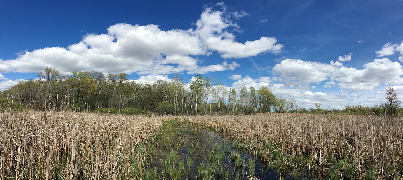Wetland panorama