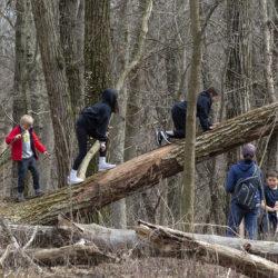 Family climbing a fallen tree