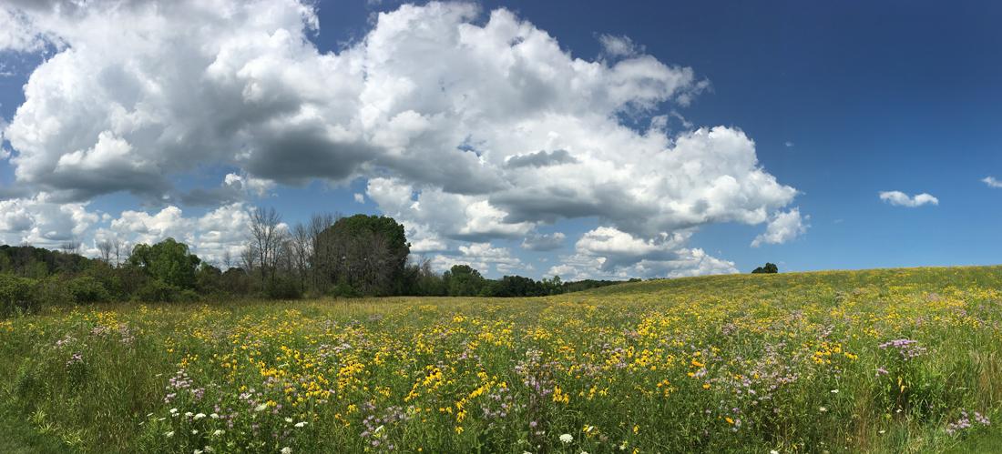 Various yellow flowers and bergamot at Tendick Nature Park, Ozaukee County.