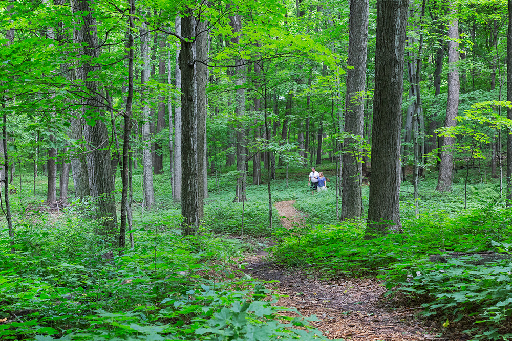 Bratt Woods Preserve, Grafton, Ozaukee Washington Land Trust