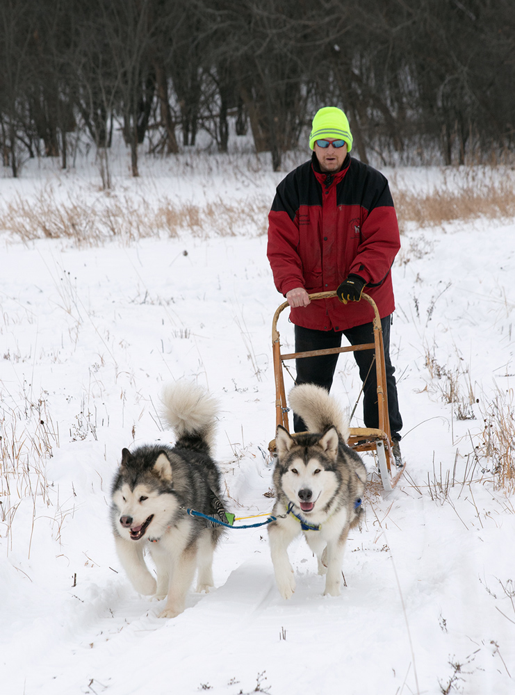 two dogs pulling sled with person