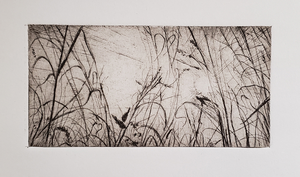 Fellenz Grasses with Sun. Etching.