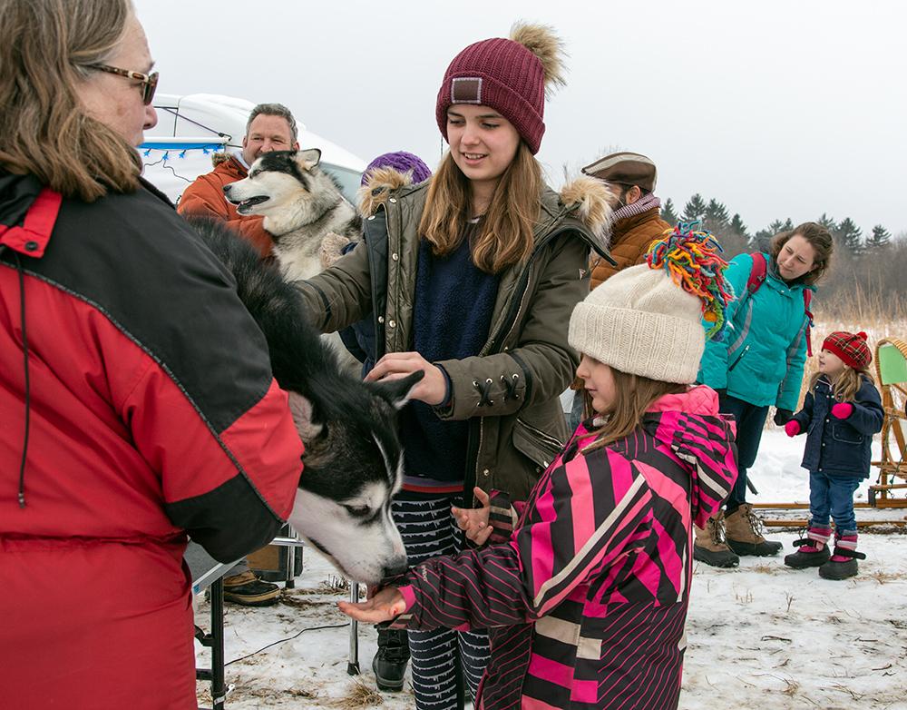 children petting Alaskan malamute sled dogs