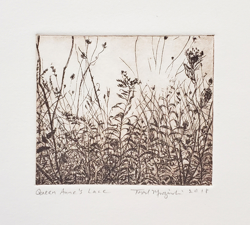 Queen Anne's Lace Sepia 2018. Etching.