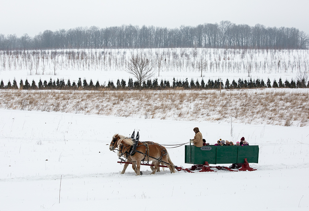 Sleigh ride and landscape
