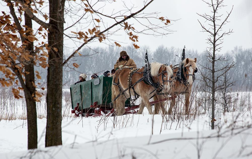 sleigh through trees