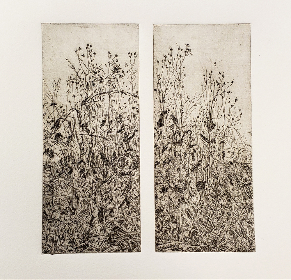 Fellenz Woods Grasses. Etching.