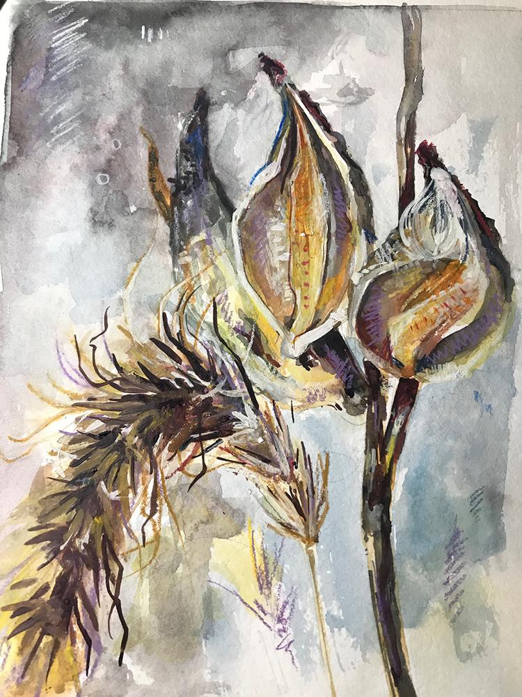 Milkweed Pods, watercolor