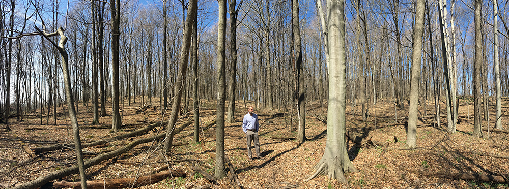 The artist in Kurtz Woods panorama