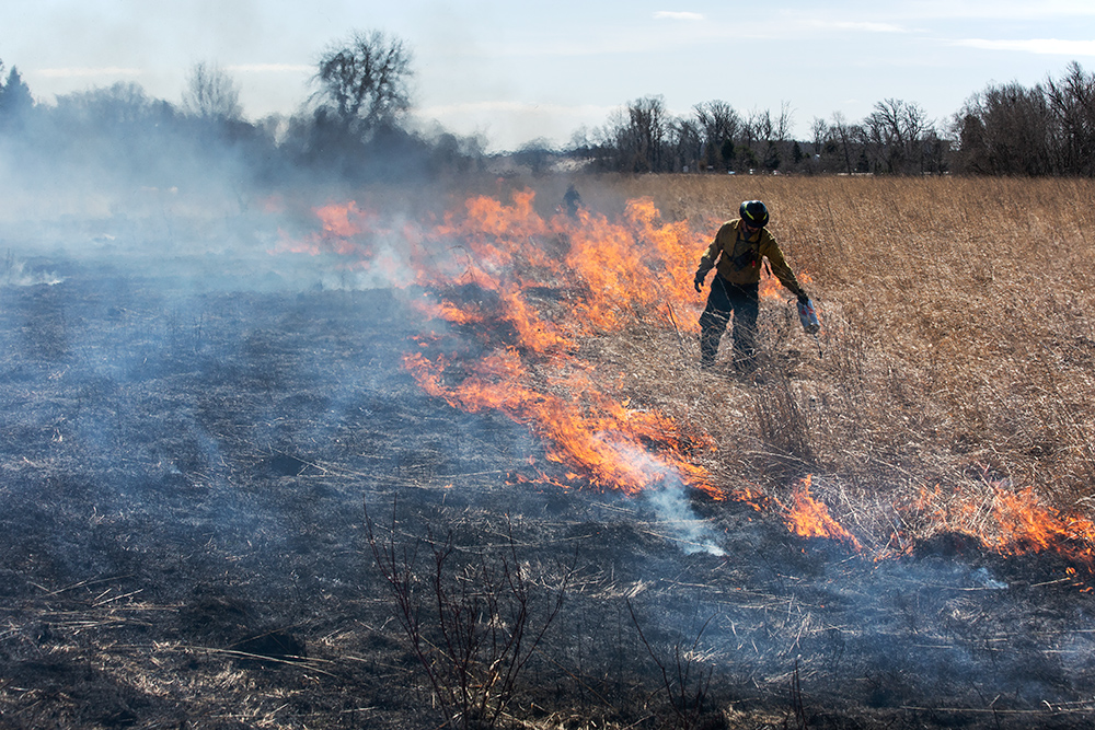 Riveredge Land Manager Matt Smith with drip torch