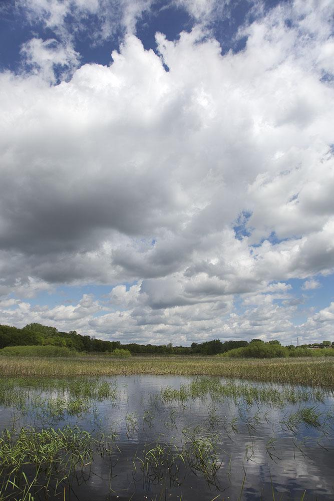wetland and sky