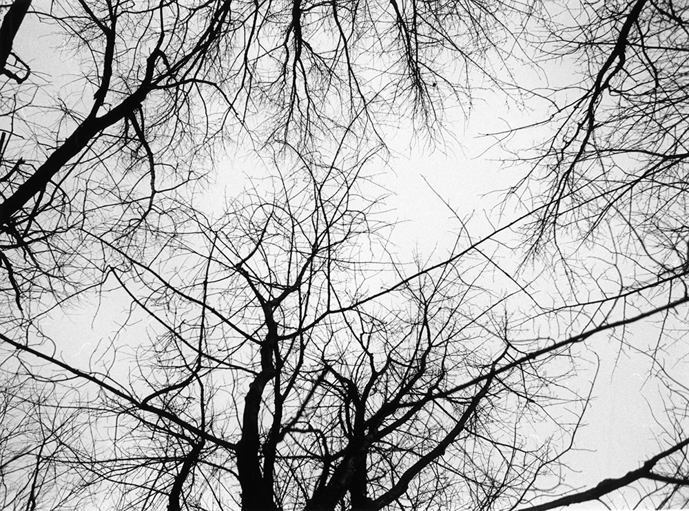 """Look Up,"" tree branches overhead"