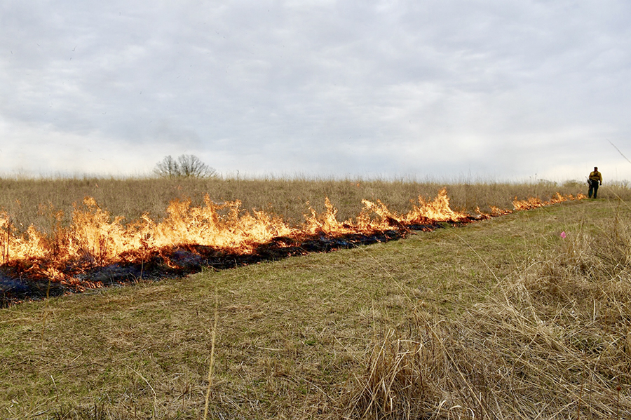 fire along firebreak