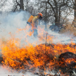 worker walking past blazing fire during a controlled burn at Washington Park