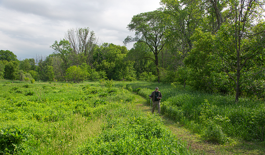 man walking the prairie path at Hames Preserve