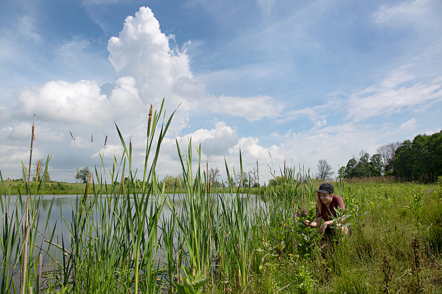 young woman admiring the milkweed in bloom and cattails next to a ponds with thunderhead