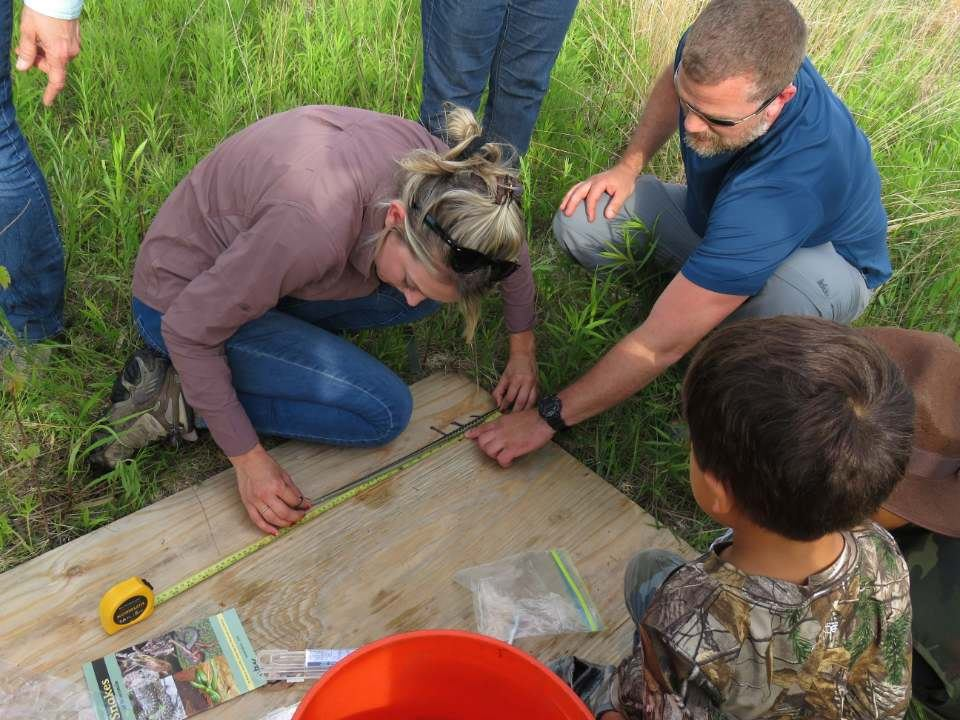 Julia Robson collecting SVL (snout-vent length) of common garter snake with assistance of volunteer