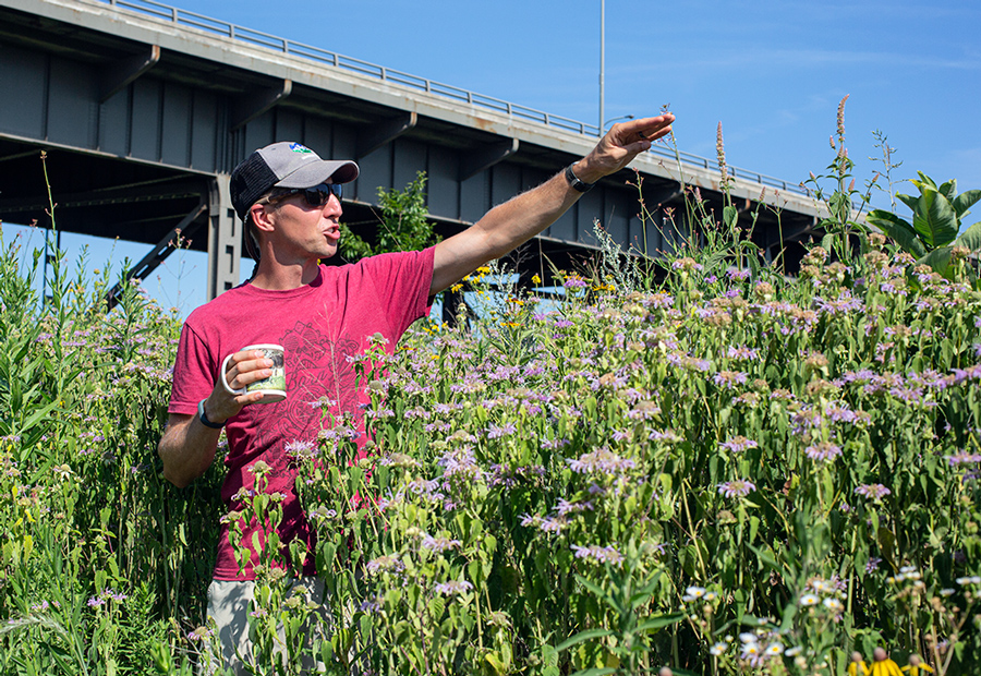 Jeff Veglahn pointing out Giant Purple Hyssop in front of 35th St viaduct