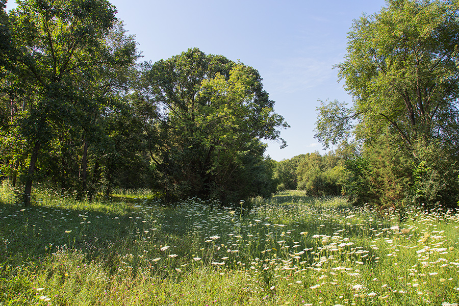 meadow with wildflowers in bloom surrounded by woodland