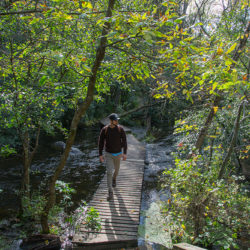 a man walking on a boardwalk across a small river in a woodland