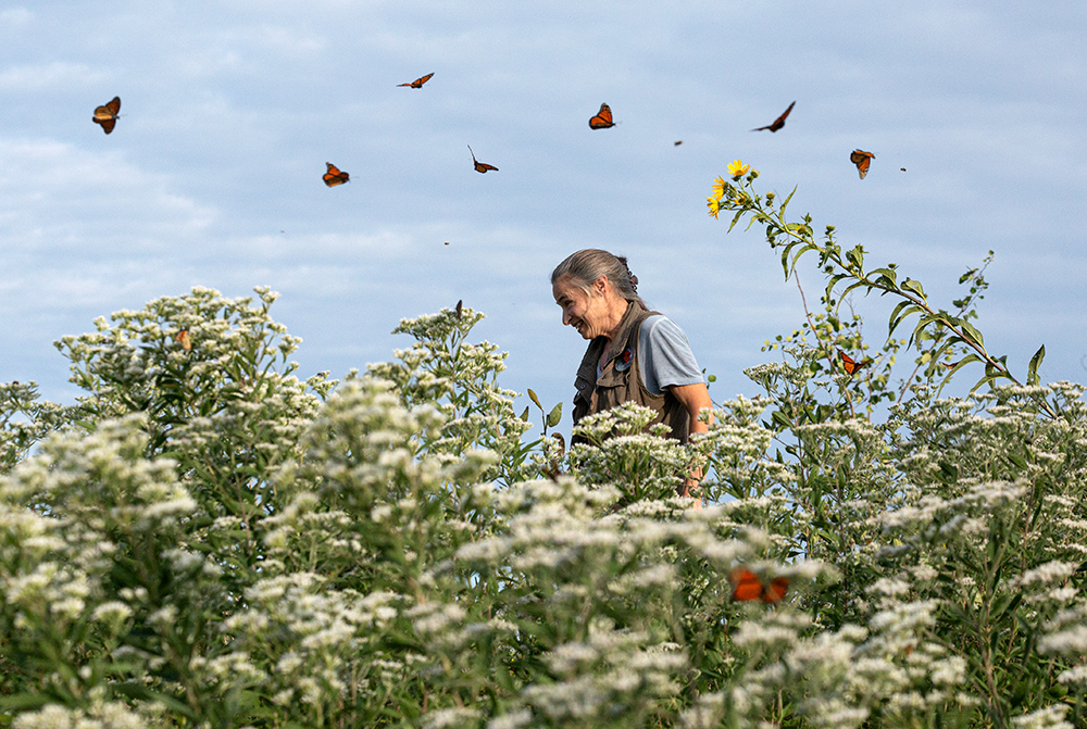 A woman in a field of flowering boneset with monarch butterflies fluttering around her head