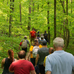 a group of people hiking down a trail in a woodland