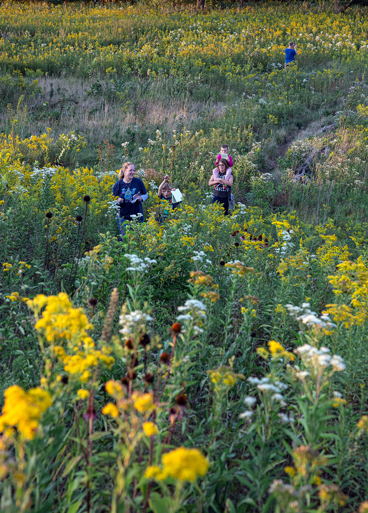 a family walking on a trail through a field of wildflowers