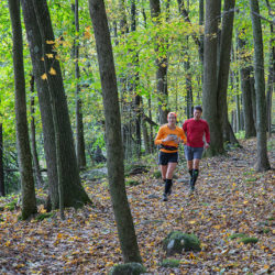Two joggers on a woodland trail