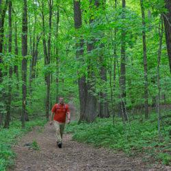 A man hiking on a wide trail through woodland