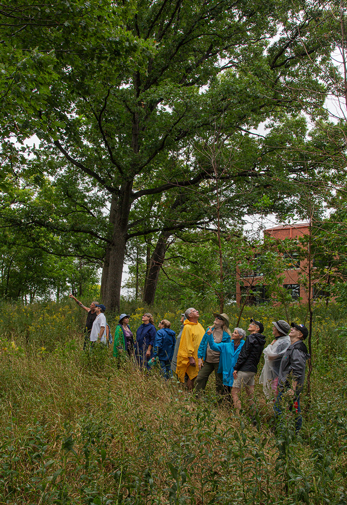 a group of people on a trail in an oak grove