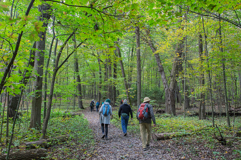a group of hikers on a trail in a woodland