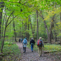 Several hikers on a trail in a woodland