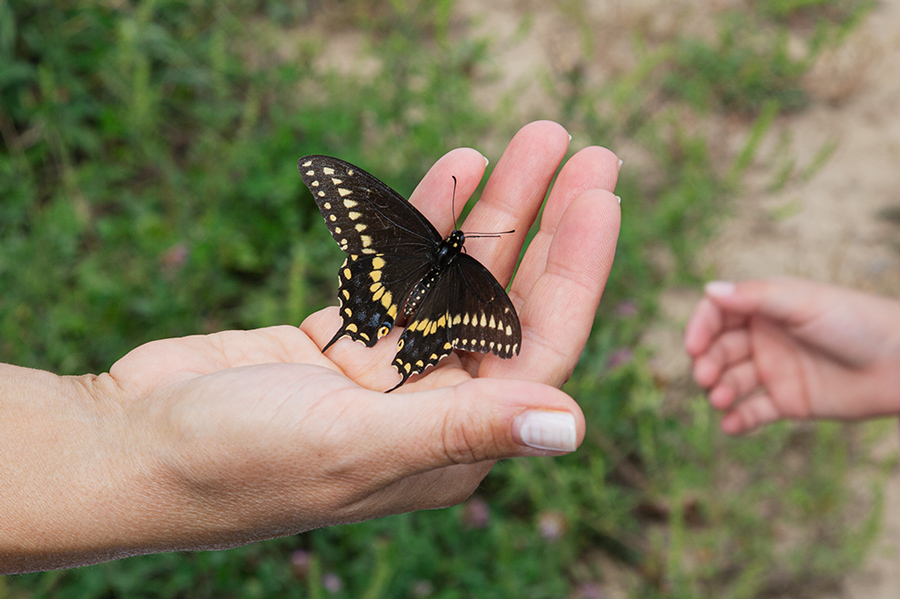 an open palm holding a tiger swallowtail butterfly