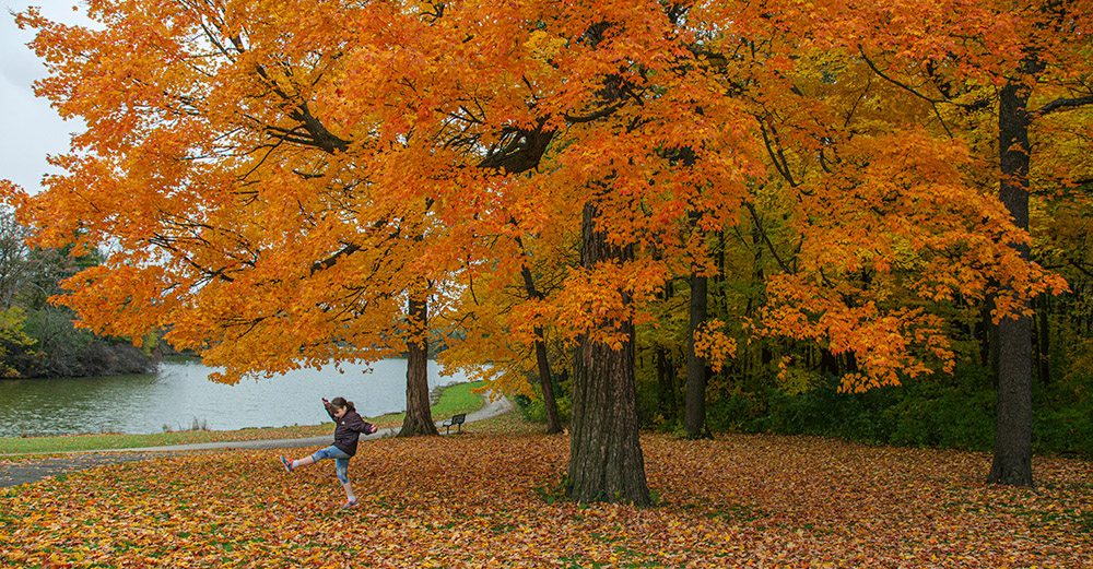 girl kicking up leaves under bright orange maple tree in Jackson Park
