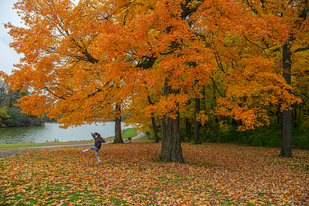 girl kicking leaves under bright orange maple tree at Jackson Park