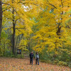 couple walking the Woodland Trail in autumn