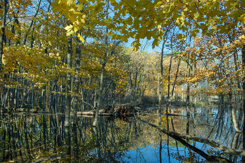 wetland pond reflecting autumn colors