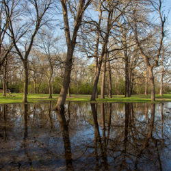 flooded section of park with woodland