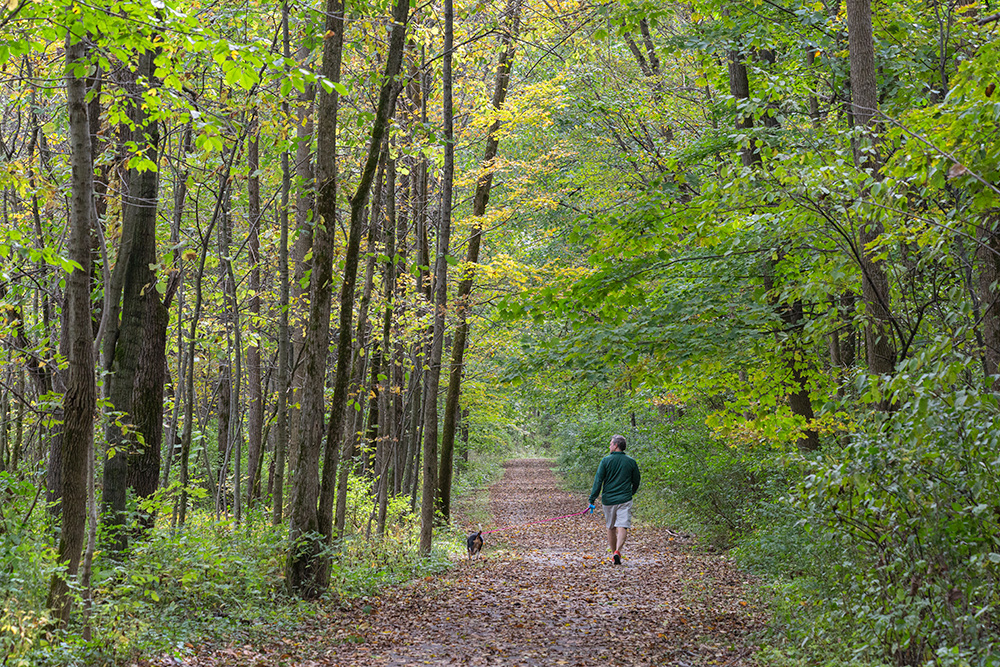 a man walking a dog on a paved trail through a woodland in Mound Zion Park