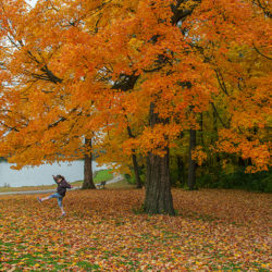 girl kicking up leaves under a bright orange maple tree