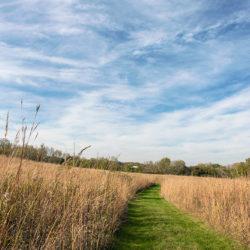 path through prairie grasses