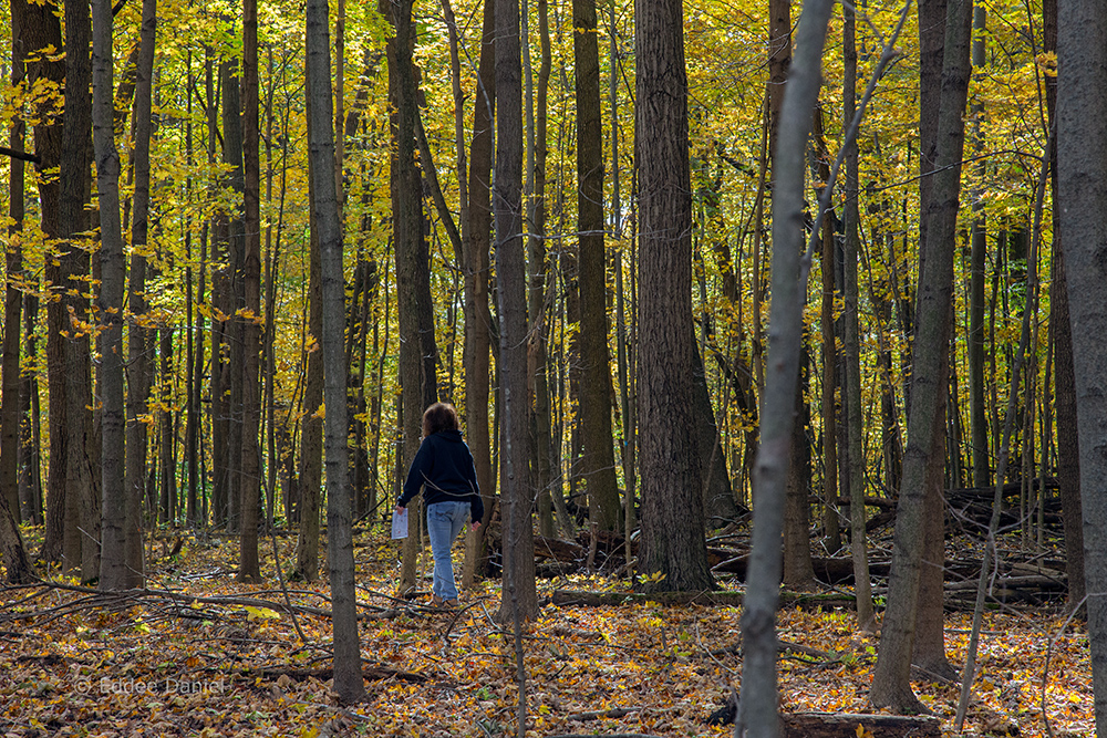 a woman walking through autumn woods