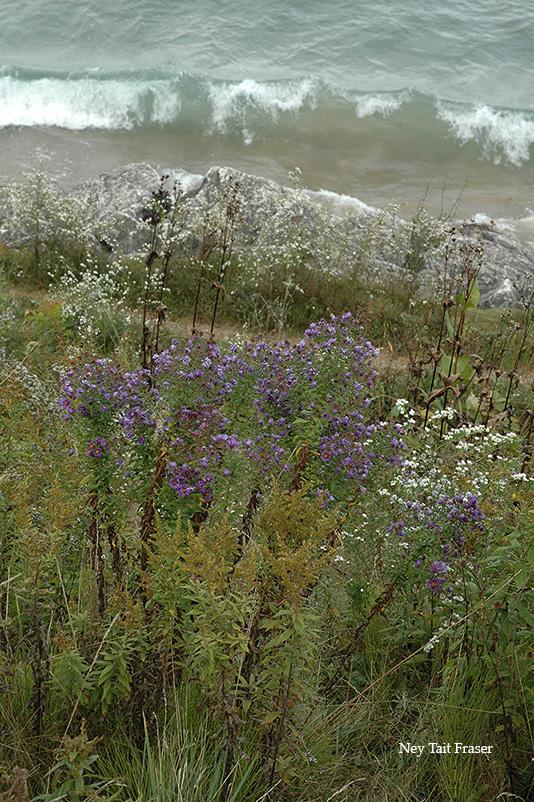 Big Bay Buckley Park wildflowers