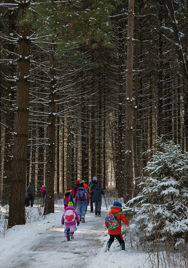 A group of hikers on a paved trail entering a pine grove.