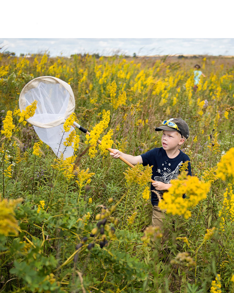 boy with net catching butterflies in field of goldenrod