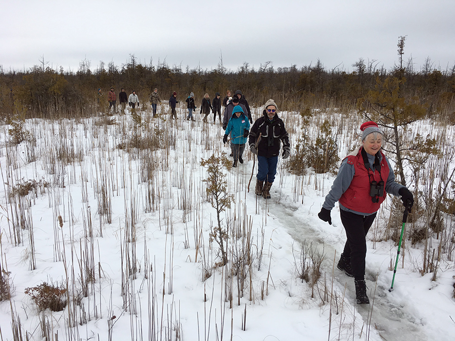 Hikers in a sedge meadow in the cedar-tamarack forest