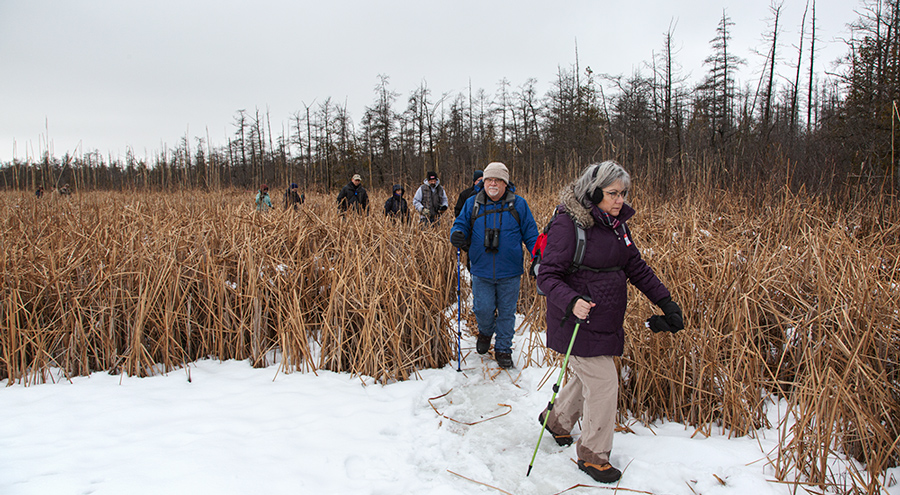 hikers in a wetland in winter