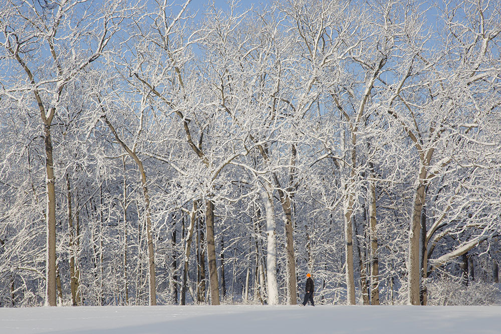 A man walking among snow-covered trees in Estabrook Park