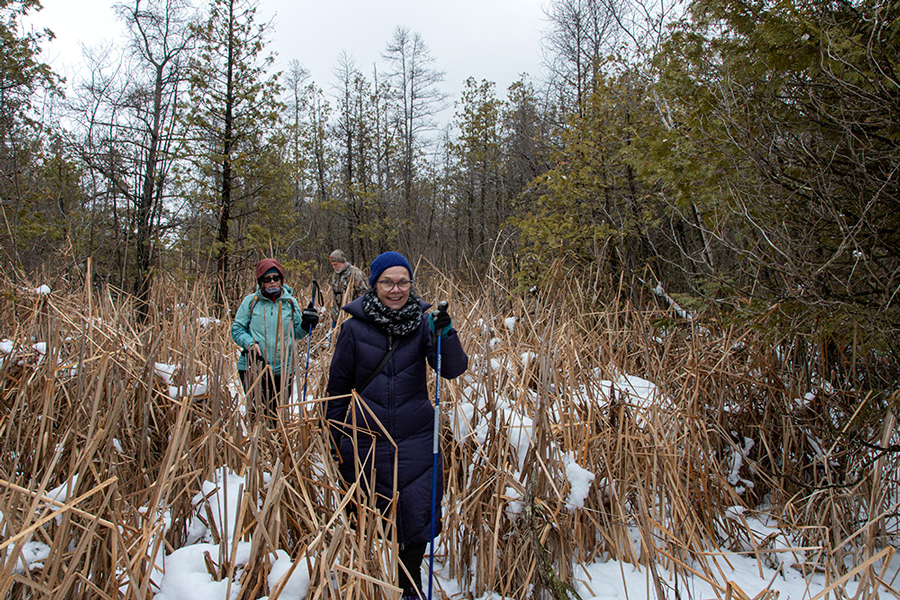People hiking in a dense section of wetland forest